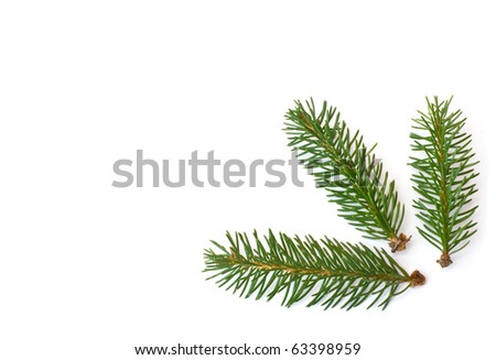 fir branch isolated white background - stock photo