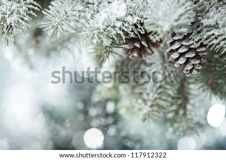 Fir branch on snow - stock photo