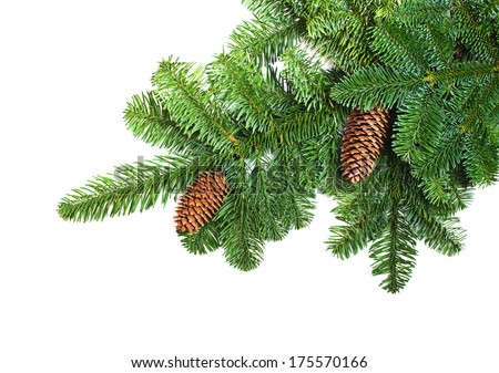 Fir branches with cones on a white background - stock photo