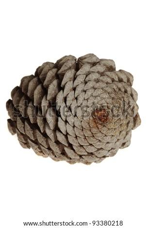 fir cone - stock photo