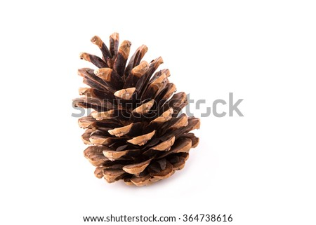 fir-cone close-up, isolated on a white background - stock photo
