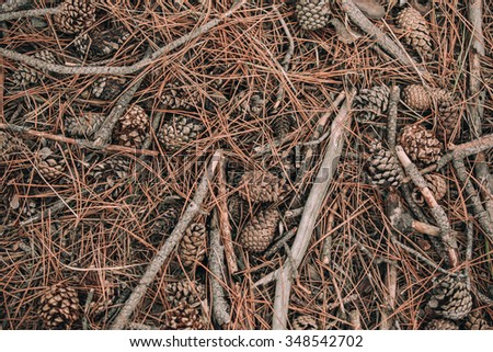 fir-cone needle background - stock photo