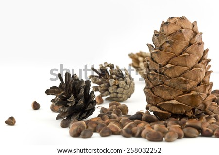 Fir-cone with pine cones and pine nuts on white background - stock photo