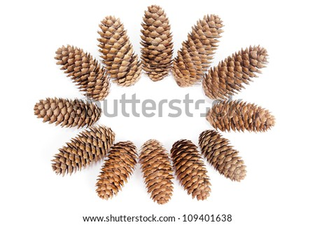 fir cones on  white background