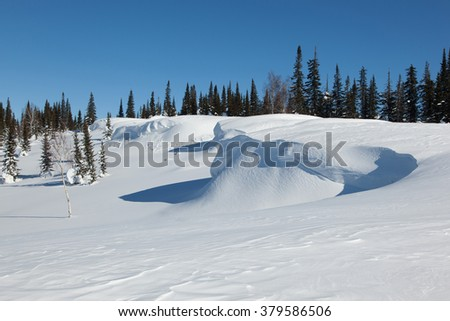 Fir forest in deep snow