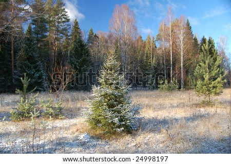fir in frost-dew - stock photo