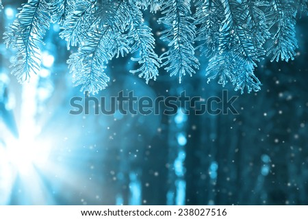 Fir-tree branch in sun beams against the wood - stock photo
