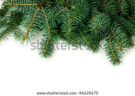 fir-tree branch on white background - stock photo