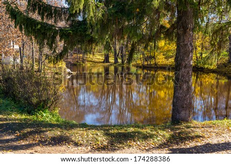 Fir tree by the Boldino pond