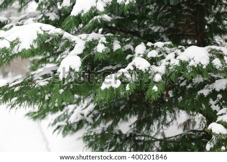 Fir tree covered with snow, closeup - stock photo