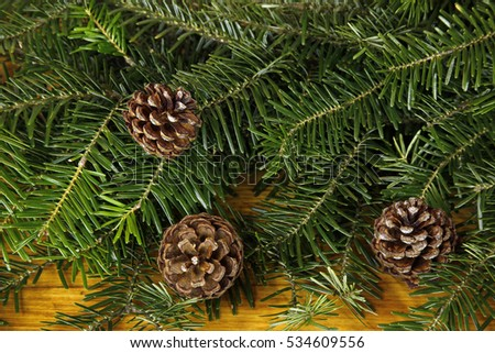 fir tree with cones background