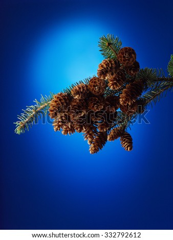 Fir tree with cones on blue background - stock photo