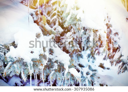 Fir-tree with snow and icicles with sunlight - stock photo