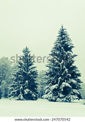 fir-trees in snow/retro filter - stock photo