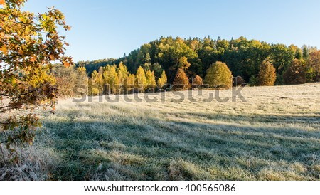 fir trees on a meadow down the will to coniferous forest in foggy forest in latvia - stock photo
