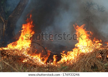 Fire and smoke on dry grass and trees  - stock photo