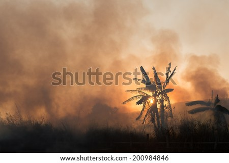 Fire and smoke on tropical fields and gardens on sunset - stock photo