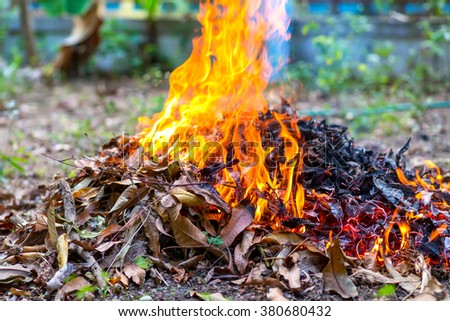 Fire burning dry leaf