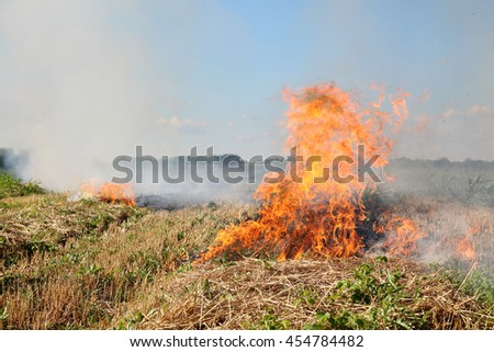 Fire in field after wheat harvest in summer