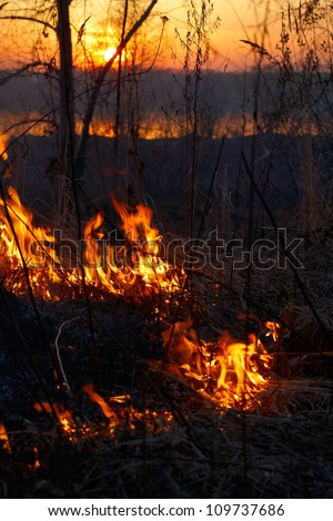 Fire in siberian forest, Novosibirsk, Russia