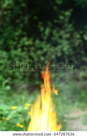 Fire in the forest
