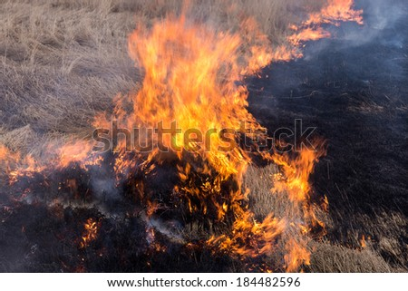 Fire. midland Europe. old grass burning in a field