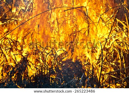 fire on field close up - stock photo