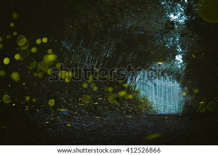 firefly in the wood - stock photo