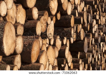 Firewood a heap. Stacked timber logs all over and close-up for industry. Tree laying on Danish harbour. - stock photo