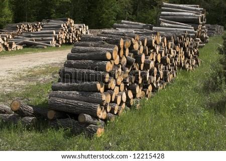 Firewood heap - stock photo