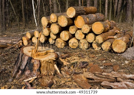 firewood store in forest - stock photo