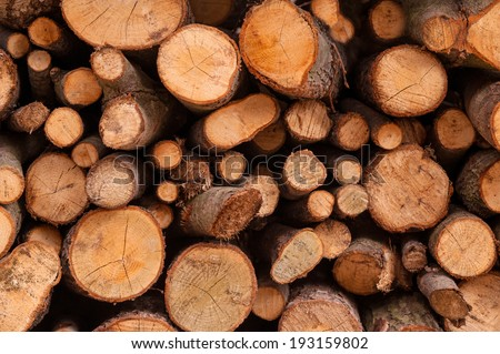 firewood timber lumber Clannish young fresh cut arranged  - stock photo