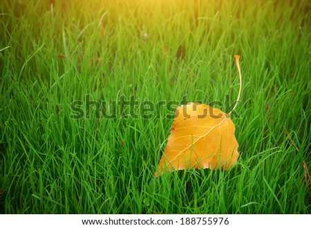 First autumn leaf. Nature composition. - stock photo