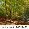 First autumn yellow foliage in sunny mountain beech forest - stock photo