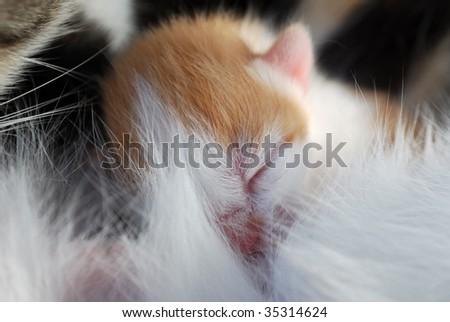 First days of life, just born kitten - stock photo