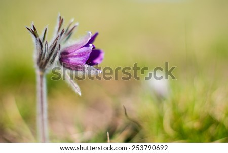 first flowers growing on the spring meadow - stock photo