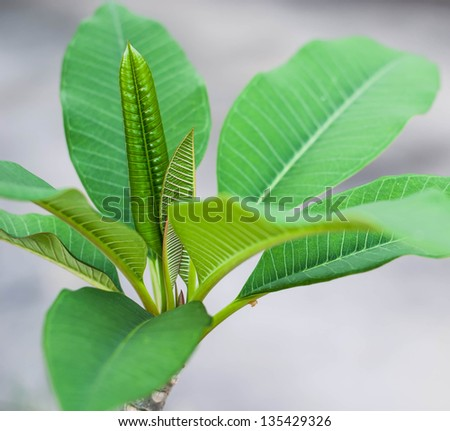 First leaf of tree,Green leaves. - stock photo