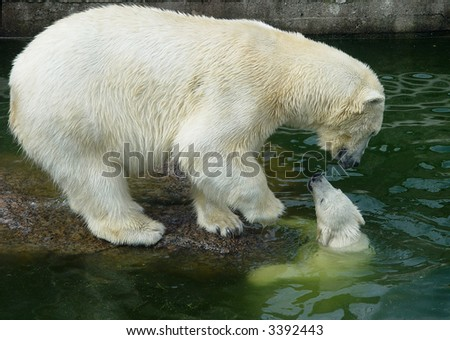 First move of the polar bear cub