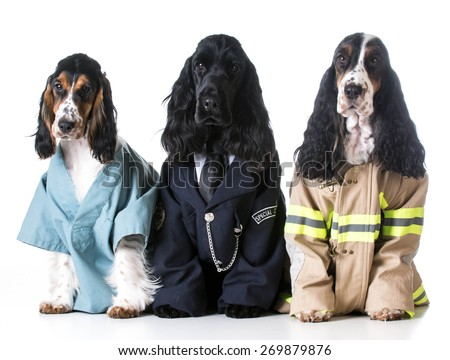 first responders - english cocker spaniels dressed up like a doctor, police officer and a fire fighter on white background - stock photo