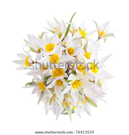 First spring flowers isolated on white - stock photo