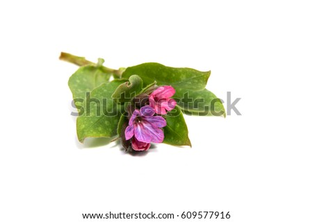brown paper bag background flwers beautiful pink rose isolated on white stock photo 613134077