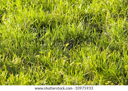 First spring grass after long grey cold Russian winter - stock photo