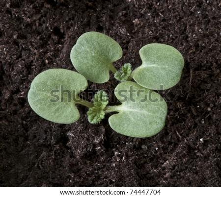 First spring sprouts - stock photo
