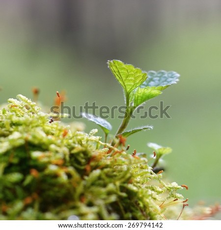 First spring young green plant growing. Moss and natural green blurred forest background. - stock photo