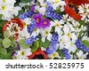 First springs flowers Muscari, Primroses and  Tulips background mix. - stock photo