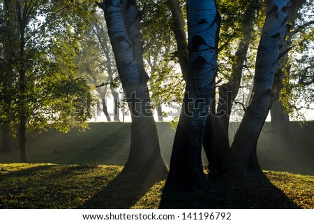 First sunrays on trees thru the morning fog, Ada river island, Belgrade, Serbia