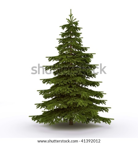 Firtree on the white background - stock photo