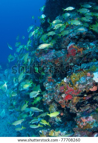 Fish aggregation  on a shipwreck in south east Florida. - stock photo