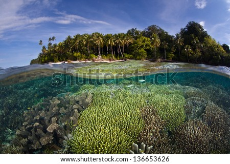 Fish and corals grow in shallow water near a tropical Pacific island.  Competition for space to grow, sunlight, and planktonic food is fierce on Indo-Pacific reefs. - stock photo