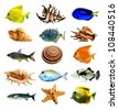 fish and shell - stock photo